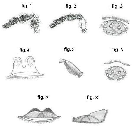 ornithoctoninae detales